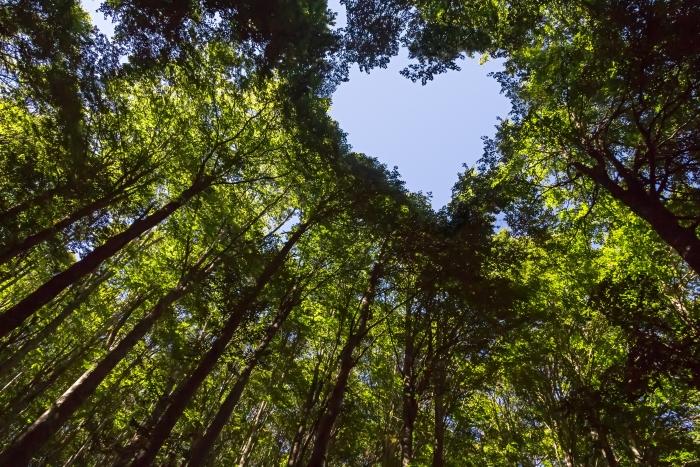 Tree-canopy-heart-shape