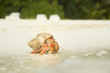 Approaching Change like a Hermit Crab