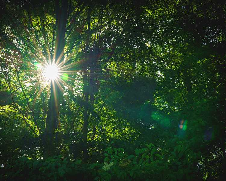 The sun breaks through the trees in a forest